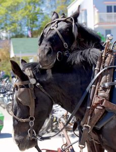 """More than 600 horses work on Mackinac Island, making the Michigan travel destination the place where """"horse is king."""""""